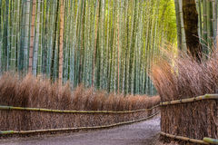 Bamboo forest path in japan Stock Images
