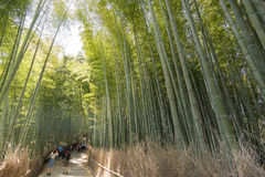Bamboo forest path. KYOTO - April 26 : Famous Arashiyama bamboo forest path with tourists on April 26, 2014 in Kyoto, Japan. Arashiyama is a area of forest and Stock Photography