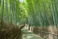 Bamboo forest path, Kyoto, Japan. Path through Japanese giant bamboo forest, Arashiyama, Kyoto, Japan Stock Image