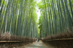 Bamboo forest path, Kyoto, Japan. Path through Japanese giant bamboo forest, Arashiyama, Kyoto, Japan Royalty Free Stock Images