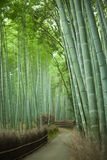 Bamboo forest path, Kyoto, Japan. Path through Japanese giant bamboo forest, Arashiyama, Kyoto, Japan Stock Photos