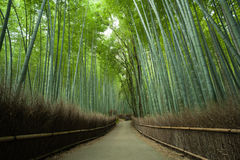 Bamboo forest path, Kyoto, Japan. Path through Japanese giant bamboo forest, Arashiyama, Kyoto, Japan Royalty Free Stock Photo