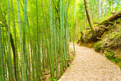 Bamboo Forest Path Less Taken Tsumago Castle H. An unused leaf covered bamboo forest road leads to the grounds of Tsumago Castle overlooking the post station Royalty Free Stock Photos