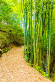 Bamboo Forest Path To Grounds Tsumago Castle Royalty Free Stock Photo