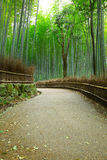 Bamboo forest and pathway Royalty Free Stock Image