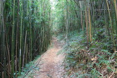 Bamboo forest. Pathway through bamboo forest, picture was taken in mountain hike, Hawaii Stock Photo