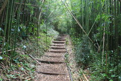 Bamboo forest. Pathway through bamboo forest, picture was taken in mountain hike, Hawaii Stock Photos