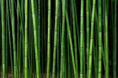 Bamboo forest pattern. Background of bamboo forest pattern stock photography