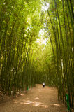 Bamboo Forest. A peaceful getaway in the Industrial City Center of Ulsan, South Korea Royalty Free Stock Images