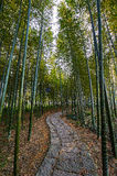 The bamboo forest. The photo was taken in Wanliuzhou park Yusan county Jiangxi province,China Stock Images