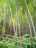 Bamboo forest border royalty free stock photography