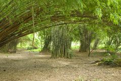 Bamboo forest in a quiet garden Stock Photography