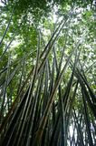 Bamboo Forest after the rain Royalty Free Stock Photography