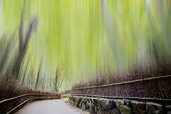 Bamboo forest with a road Royalty Free Stock Image