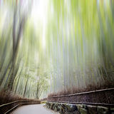 Bamboo forest with a road Stock Image