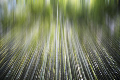 Bamboo forest with a road Royalty Free Stock Images