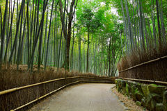Bamboo forest with road Stock Photo
