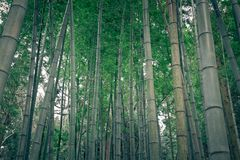 Bamboo forest in rural Japan Royalty Free Stock Photos