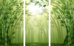 Bamboo forest scenes with mist Royalty Free Stock Photo