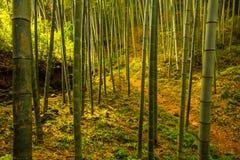 Bamboo Forest of Shisun China stock photography