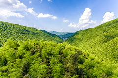 Bamboo forest in south china Stock Photo