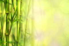 Bamboo forest spa background. Watercolor hand drawn green botanical illustration with space for text royalty free stock photography