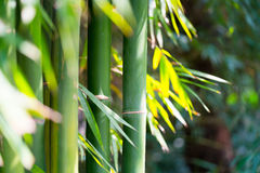 The bamboo forest Stock Photos