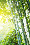 The bamboo forest Royalty Free Stock Photos