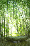 Bamboo Forest. Stone bench in a Bamboo Forest Royalty Free Stock Images