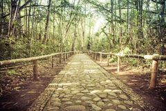 Bamboo forest with stone road Royalty Free Stock Photos