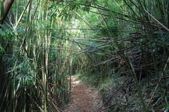 Bamboo forest after storm Stock Image
