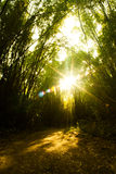 Bamboo Forest With sunset. Thailand Royalty Free Stock Image
