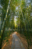The bamboo forest sunset. The photo was taken in Wanliuzhou park Yusan county Jiangxi province,China Royalty Free Stock Image