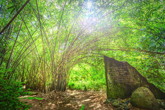 Bamboo forest with sunstars through leaf Royalty Free Stock Photography