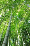Bamboo forest. Taken in Japan Royalty Free Stock Photos