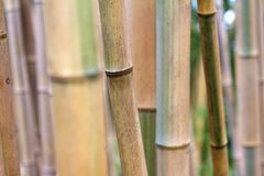 Bamboo forest texture close up stock photos