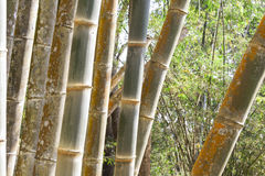 Bamboo forest in Thailand Royalty Free Stock Photo