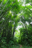 Bamboo forest trail Royalty Free Stock Image