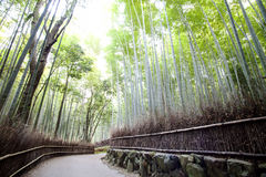 Bamboo forest trails, Japan Stock Photo
