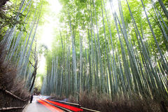 Bamboo forest trails, Japan Royalty Free Stock Photos