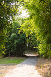 Bamboo forest trees in the road Royalty Free Stock Photos