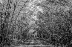 The bamboo forest tunnel Royalty Free Stock Images