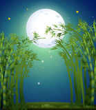 A bamboo forest under the bright fullmoon Stock Image