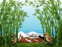 A bamboo forest view. Illustration of a bamboo forest view Stock Photos