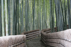 Bamboo Forest Walk,. This ia a bamboo forest near Kyoto, Japan. Bamboo is a fast growing grass and forms mysterious looking forests royalty free stock photo