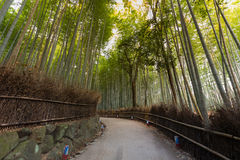 Bamboo Forest with walking way on arashiyama. Kyoto, Japan. Green bamboo fence background texture Stock Photos