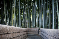 Bamboo forest walkway in Kyoto Japan. Walkway through forest of bamboo at the Nenbutsu Ji Temple in Arashiyama Kyoto Japan Stock Photography