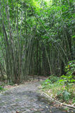 Bamboo Forest Walkway Royalty Free Stock Photos