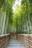 Bamboo Forest Walkway. Stock Image