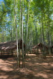 Bamboo forest and wooden pavilions Royalty Free Stock Photography